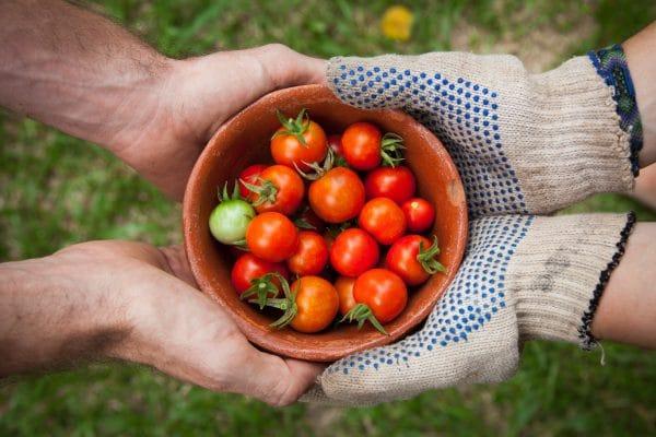 נחתם היום הסכם למים לחקלאות. כ- 520 מיליון ₪ יועברו לחקלאים